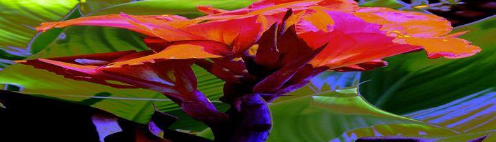 Red Canna Fire - M Diane Bonaparte