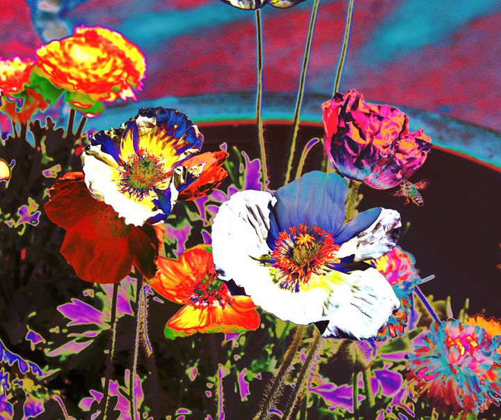 Poppy Abstract 3 - M Diane Bonaparte