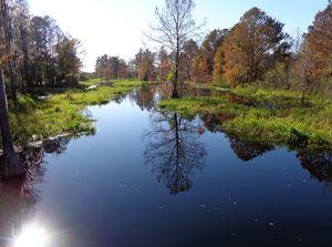 Cross Creek #2