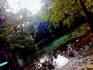 Manatee Springs