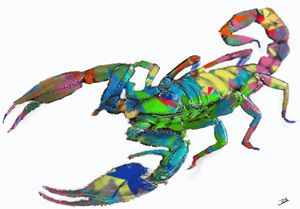 colourfull scorpio
