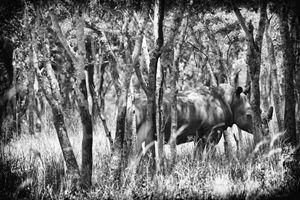 Rhino B&W - Heatherae Photography