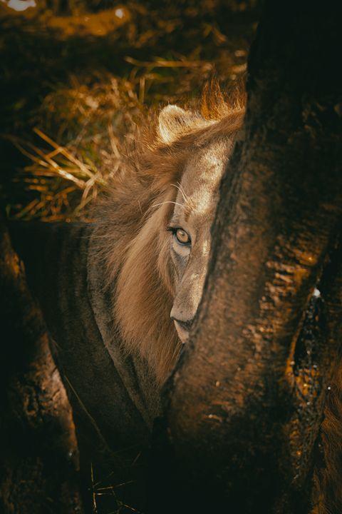 Hidden Lion - Heatherae Photography
