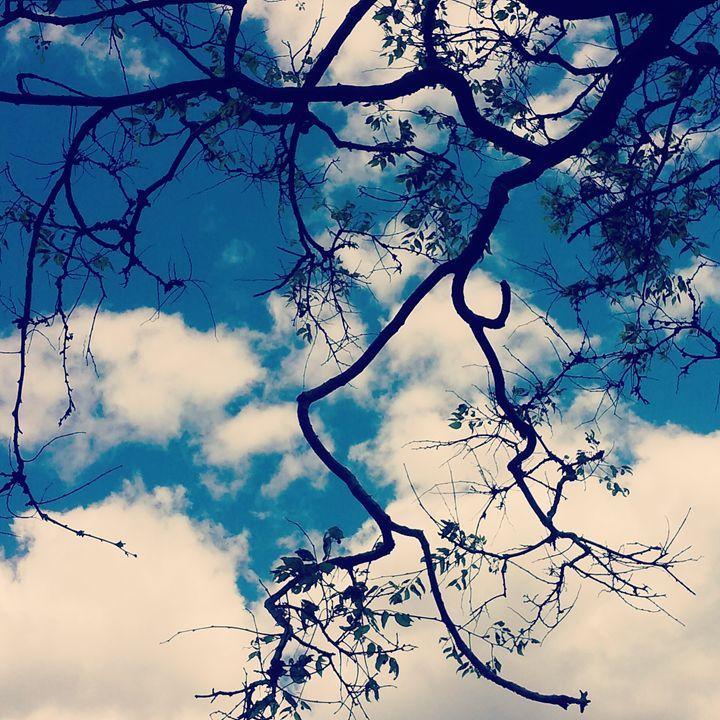 Silhouette - Creations by Hosanna