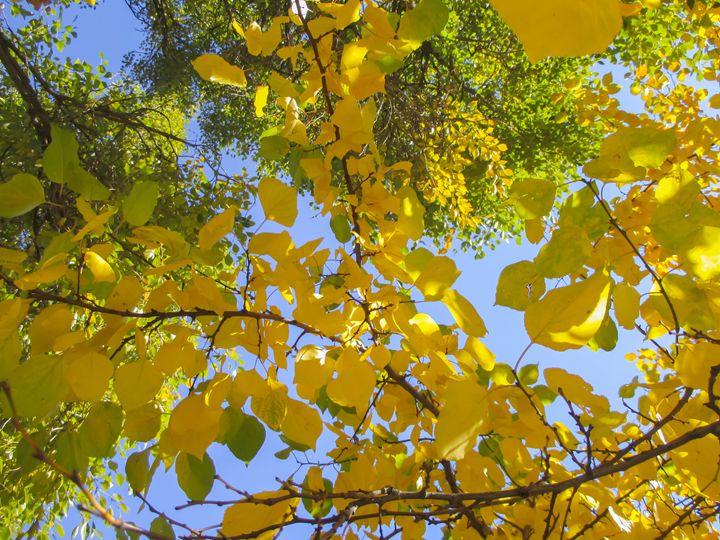 Autumn pattern - Julia Gogol Art
