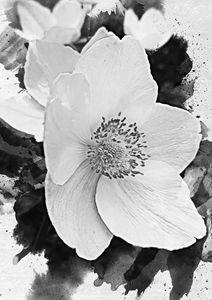 White Anemone - Julia Gogol Art