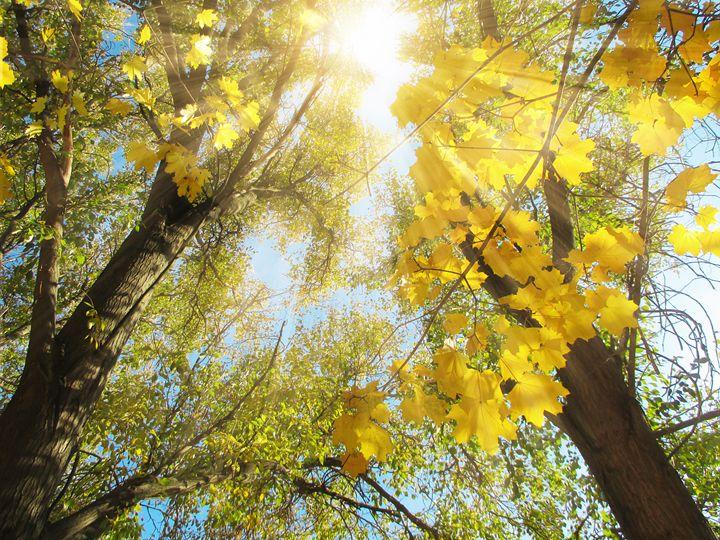 Autumn Trees - Julia Gogol Art
