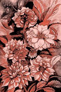 Chrysanthemums in coral