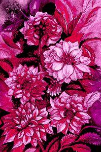 Chrysanthemums in purple