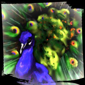 Peacock - Ashley Hawkins