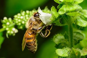 Bee In the Basil - Jarrett Art