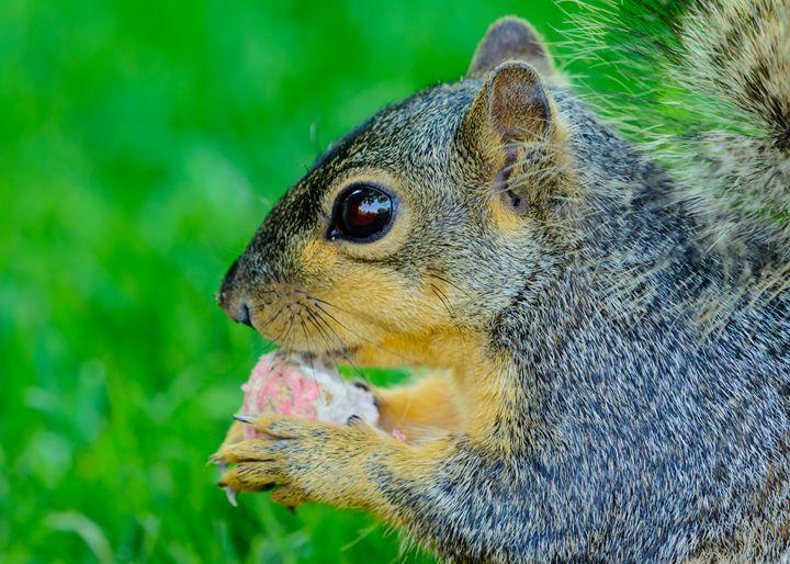 Closeup of squirrel holding a radish - Jarrett Art