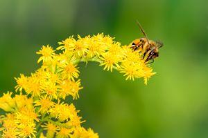 Honeybee on the Wildflowers - Jarrett Art