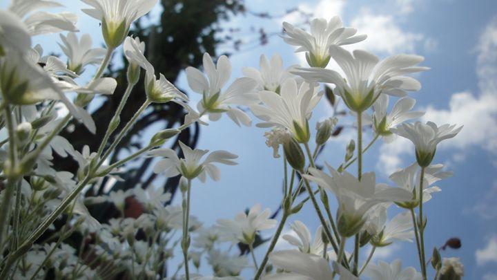 white flowers2 - jamie-art