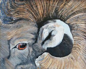 Close up of Big Horn Sheep Ram