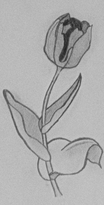 Tulip - Creative Inspirations