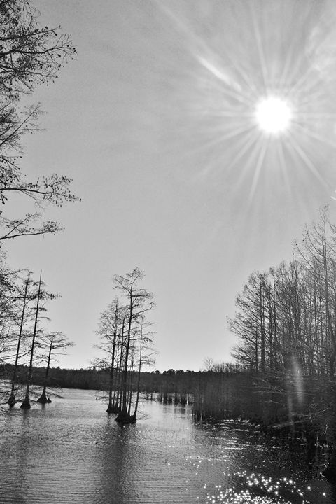 Mississippi Winter - Damion Poe Photography