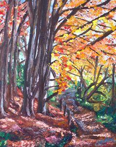 An Autumn Rhyswg Walk