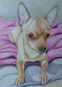 Bailey Colour pencil Chihuahua Portr