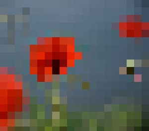 Water poppies
