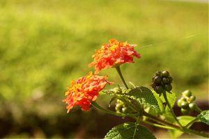 Beautiful Flower ;D