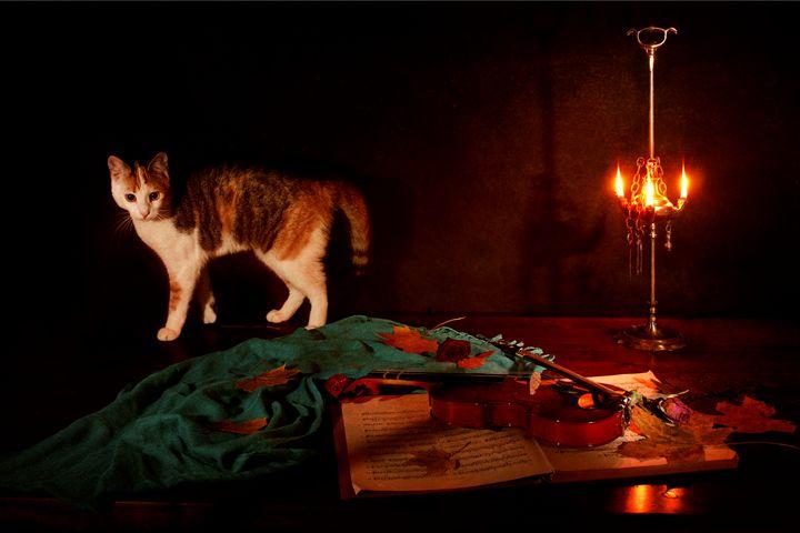 Nocturne for violin a cat - Elena Degano Art photo