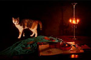Nocturne for violin a cat