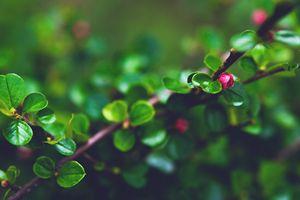 Tiny red blossom