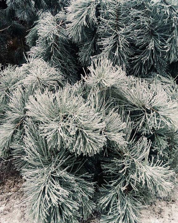 Winter - Olivia Achorn