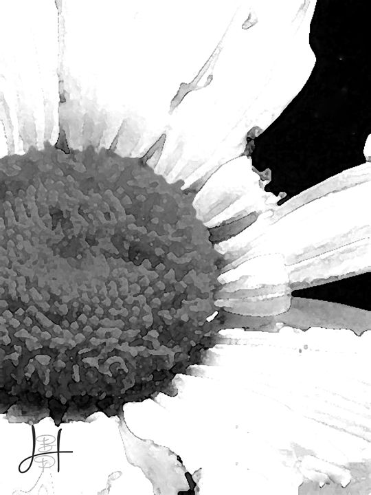 Broken Daisy - Blaire Hobbs Photography & Digital Arts