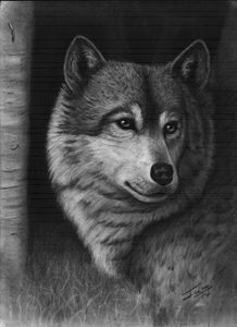 I See You (Wolf in Birch Trees)
