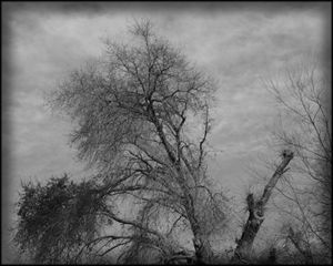 Trees and Clouds No 2