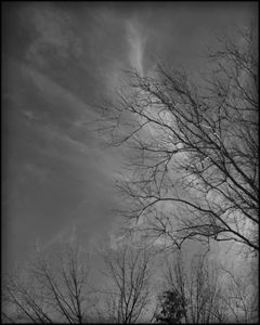 Trees and Clouds No 3