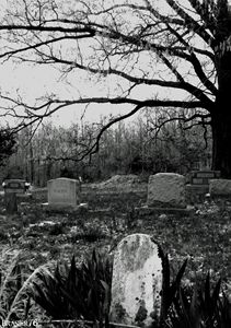 Tombstones and Tree