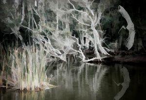 Night Swamp - RosalieScanlonPhotography&Art
