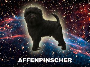 Spacedog 1: Affenpinscher