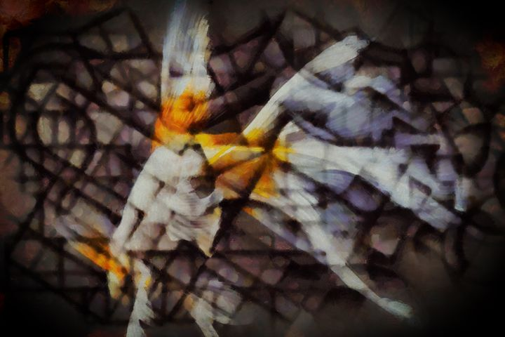 Goldfish - Karl J. Struss