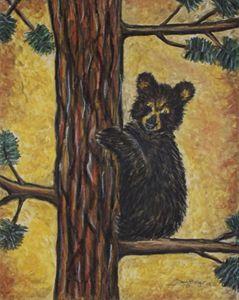 Bear Cub in a Ponderosa Pine