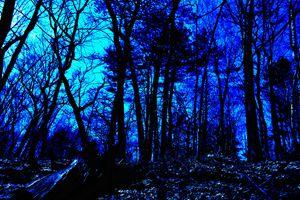 Licoln Woods gray scale color value