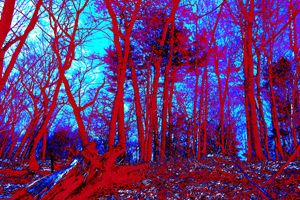 Lincoln Woods color value