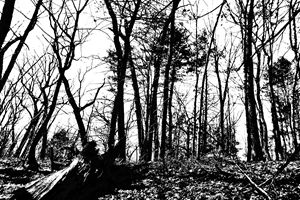 Lincoln Woods Black and White