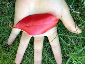 The Eye of Autumn
