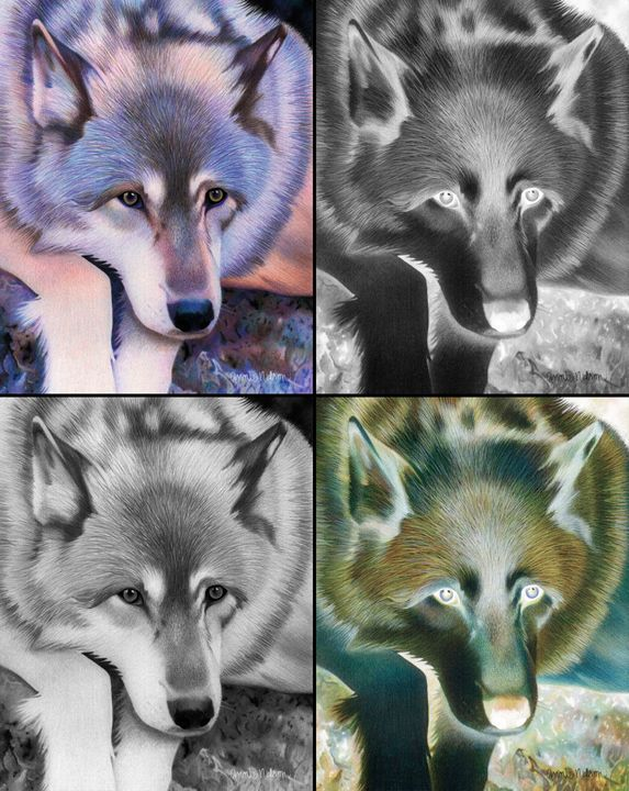 Gray Wolf Collage - Annie's Colored Pencil Art