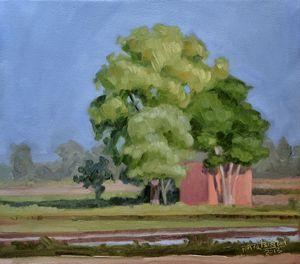 Punjab - Landscape