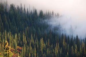 Fog Infiltrating a Mountainside