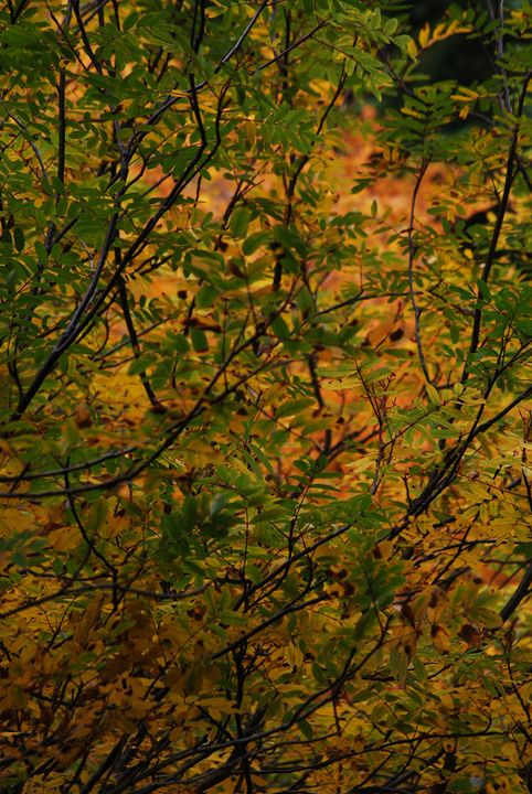 Golds and Greens - Wend Images Gallery
