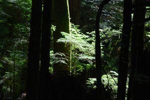 Sunlight on the Undergrowth
