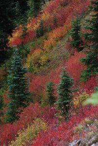 Autumn Mountain Glory