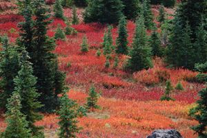 The Greens, Reds and Golds of Autumn