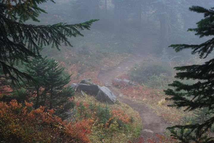 Foggy Trail to Noble Knob - Wend Images Gallery
